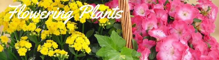 Flowering Plants & Blooming plants