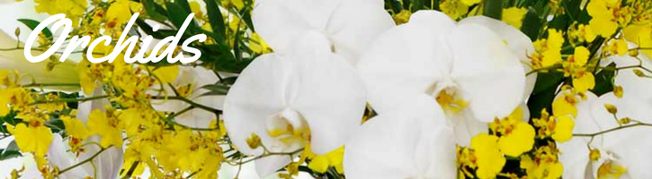 Orchid Plants & Exotic Orchids Bouquets